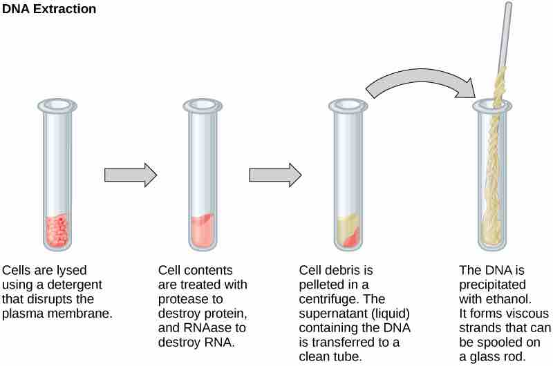 Image Dna Extraction